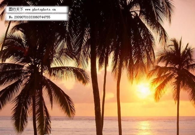 椰树 自然风景 自然景观 南图片素材下载 海南 椰树 黄昏 夕阳 海滩