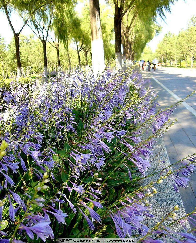 路边一景 夏天 树林 小路 阳光 蓝色的花 旅游摄影 其他 摄影图库 72图片