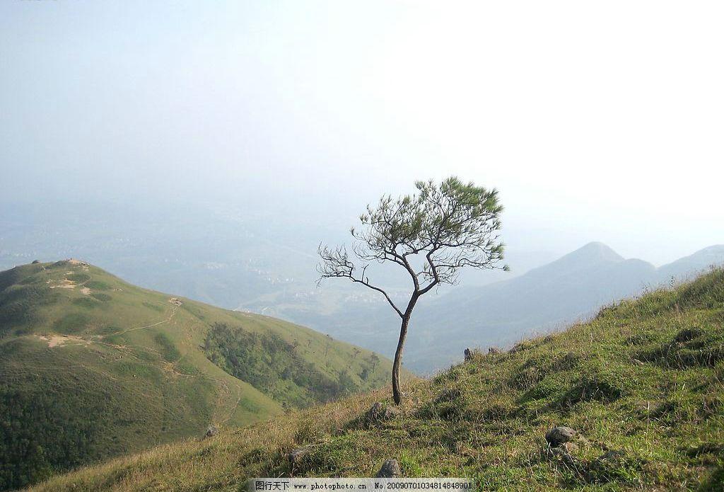 自然风景山 远景 野草 独树图片
