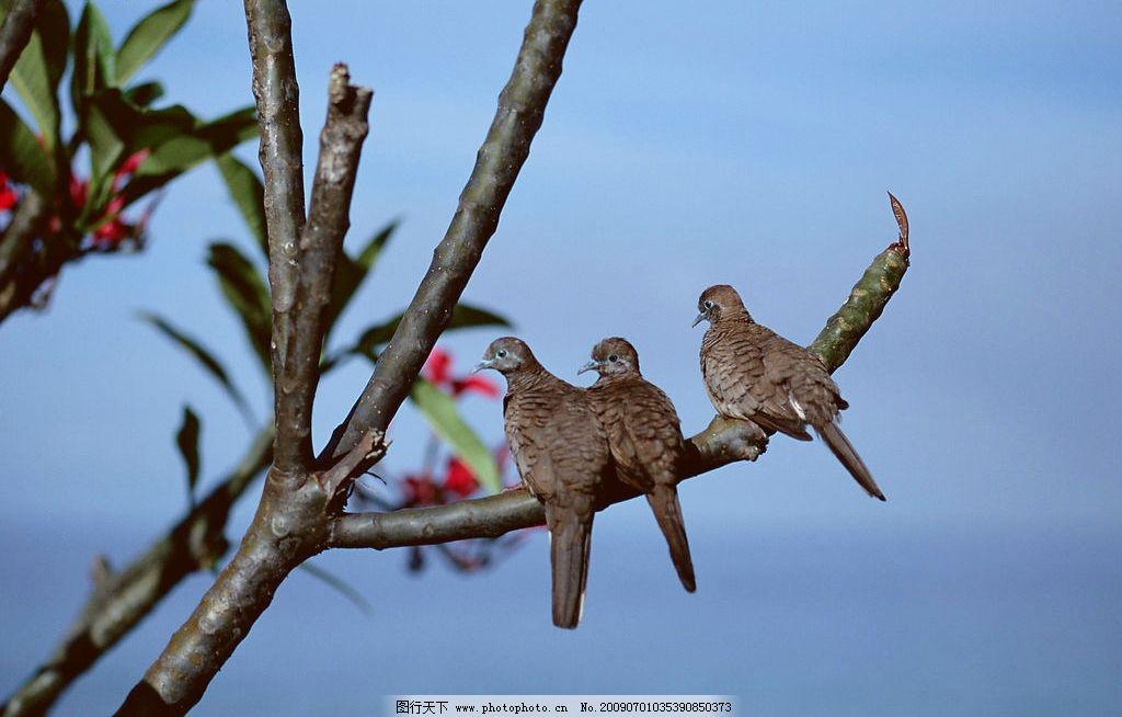 枝头小鸟 枝头 树枝 小鸟 鸟儿 鸟 蓝天 树枝上的小鸟 生物世界 鸟类