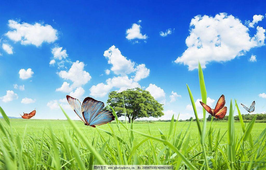 绿茵 蓝天 白云 云彩 背景 风景 草地 绿地 树 树木 花草 花 动物