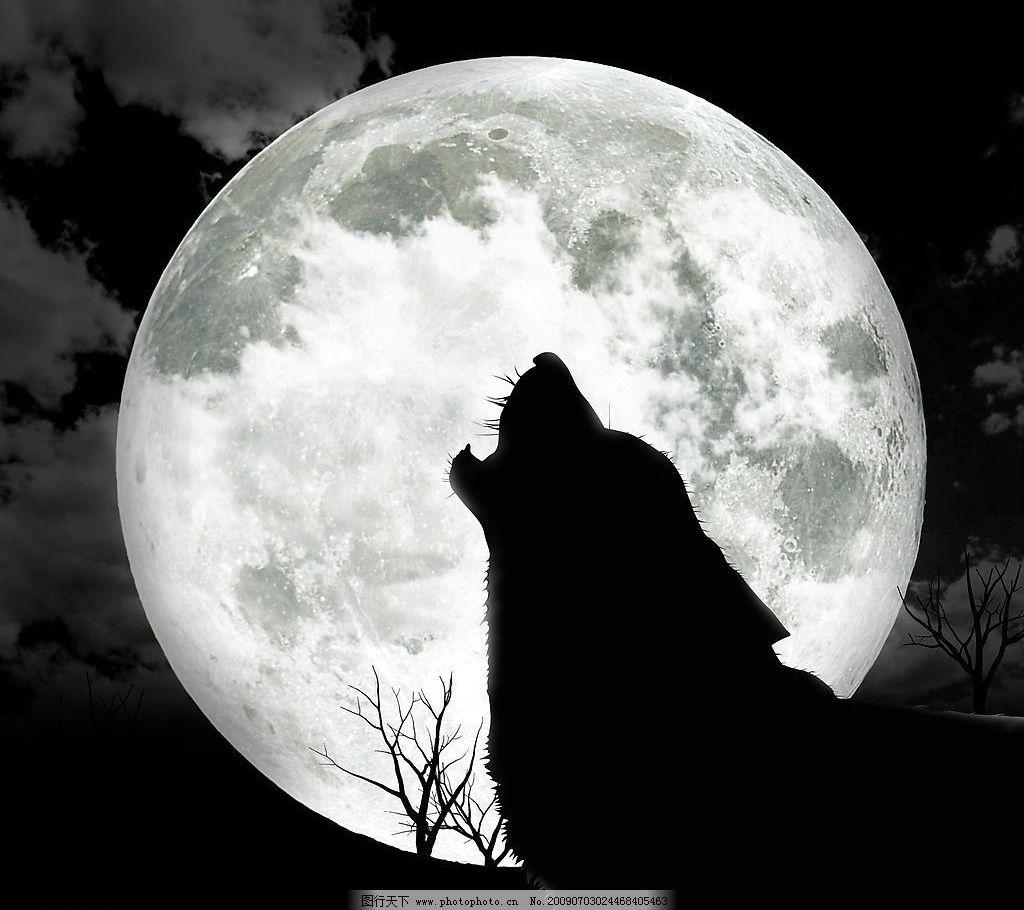 很狼很可爱最