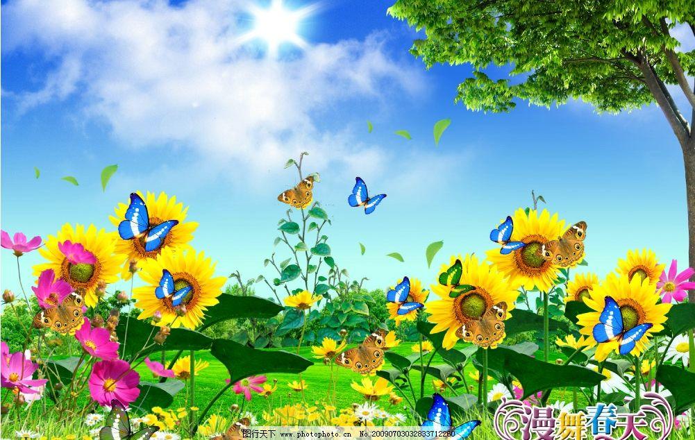 風景 春天景色 藍天草地 鮮花 菊花 大樹 婚紗模板 蝴蝶飛舞