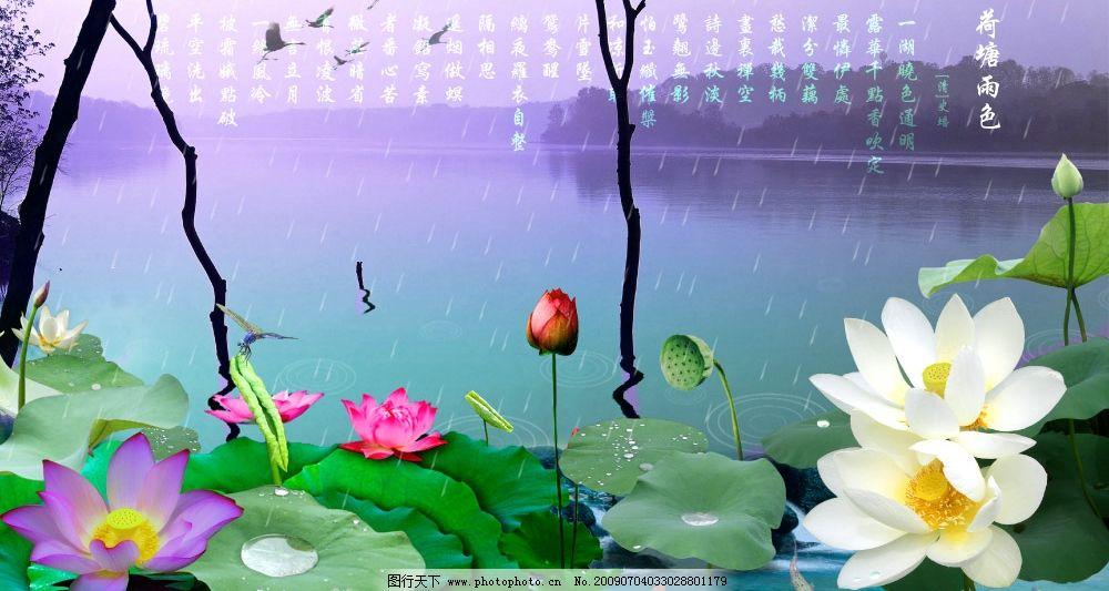 设计图库 psd?#26893;?其他  荷塘雨色 风景 荷花 荷叶 莲蓬 莲花 雨水