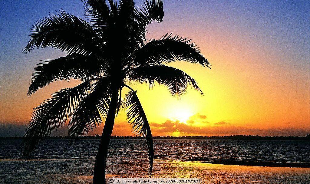 黄昏椰树 黄昏 椰树 大海 夕阳 岛屿 旅游摄影 自然风景 摄影图库 118
