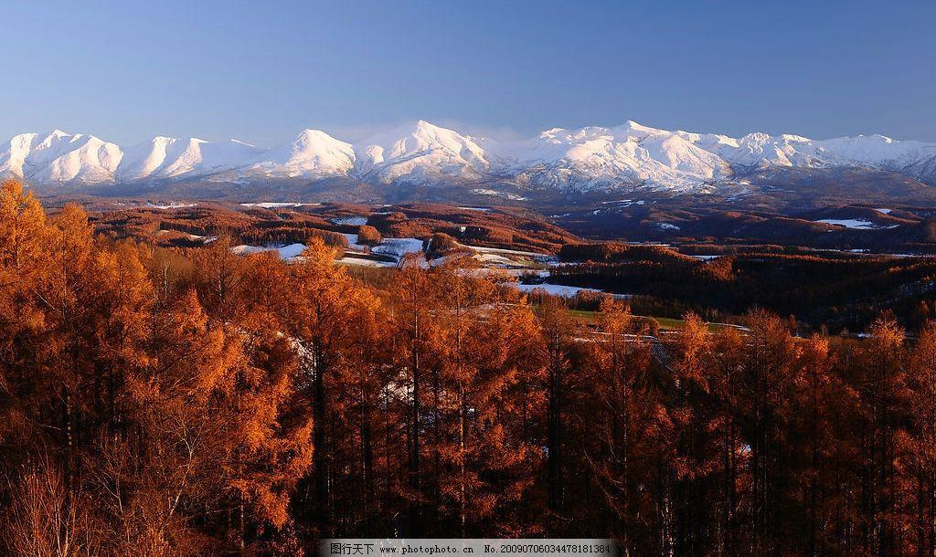 雪山枫林 红枫林 自然景观 山水风景 摄影图库