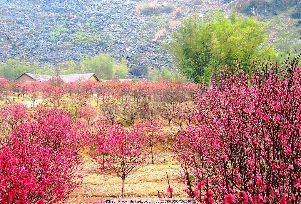 桃花遍地 美丽风景 桃林 竹树 落花 岩石 远山 红色 浪漫