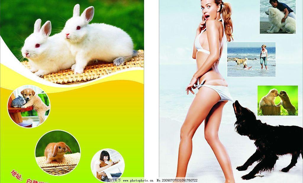 宣传单 狗 兔子 美女 可爱宠物