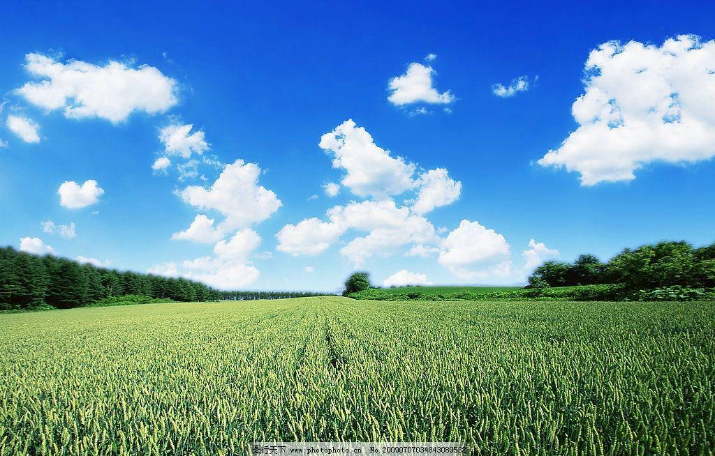 绿茵蓝天白云 绿茵 蓝天 白云 云彩 农村风光 背景 风景 田园 绿地 树