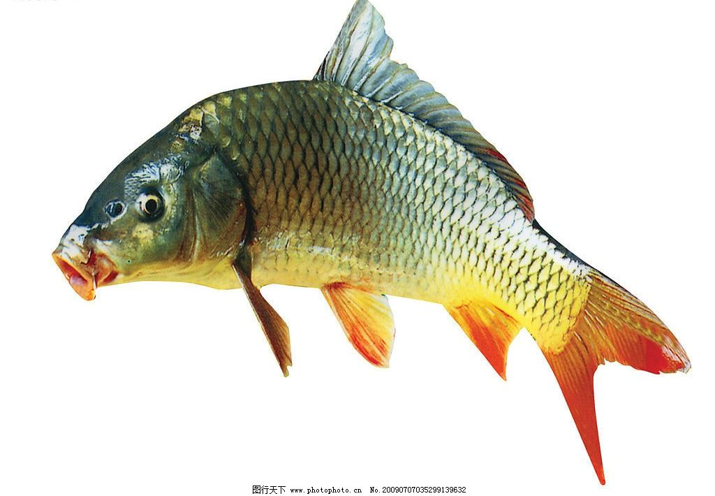 壁纸 动物 鱼 鱼类 1024_710