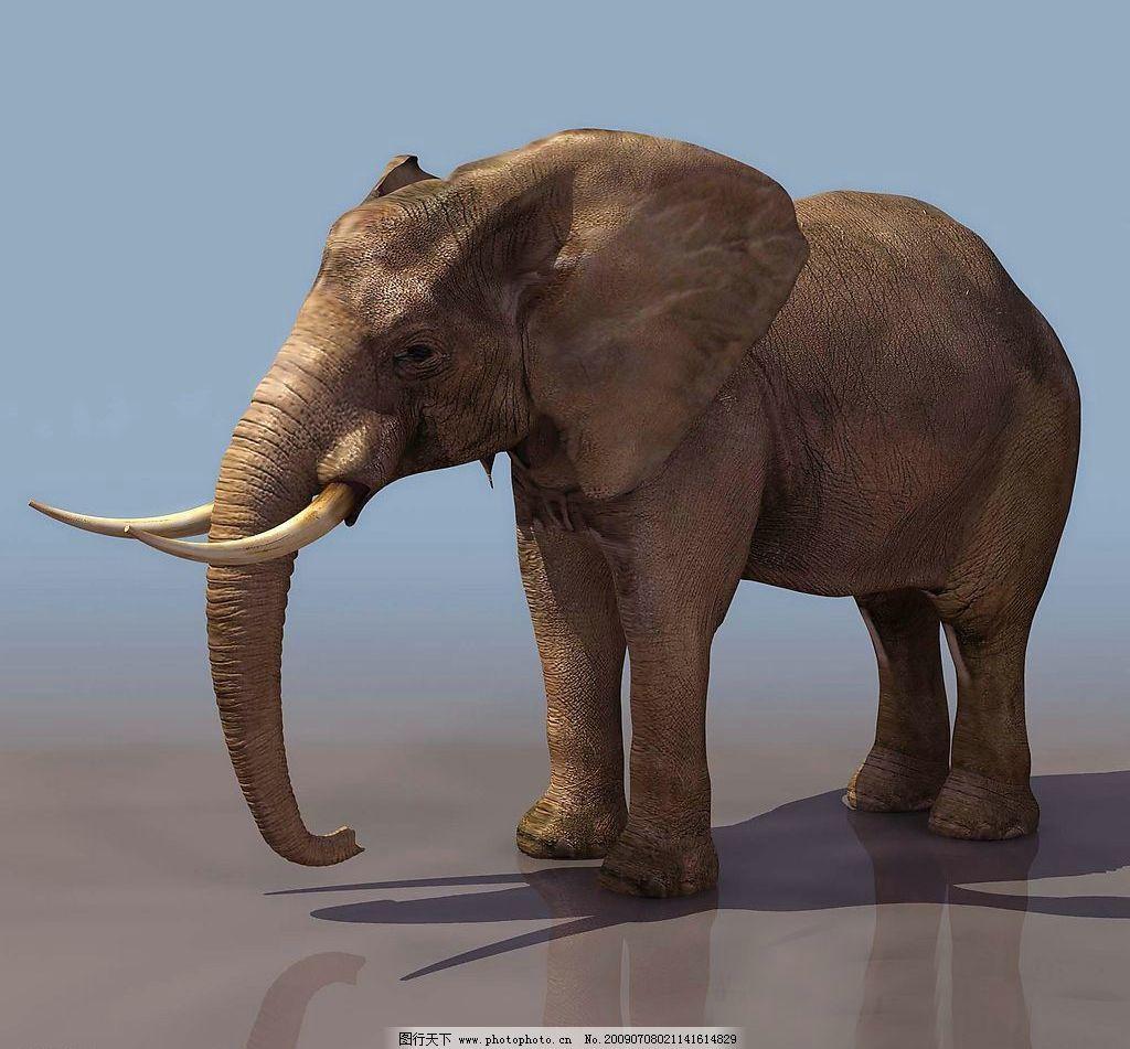 3d大象 动物 高大