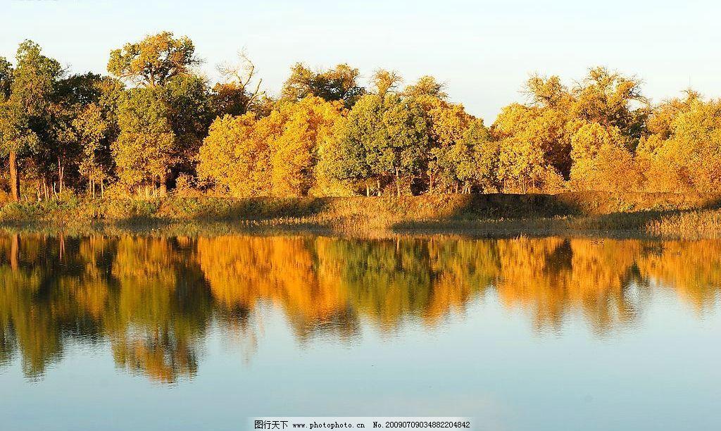 额济纳旗 内蒙古 阿拉善盟 西部 风光 摄影 黄叶 金色 胡杨 神树 旅行