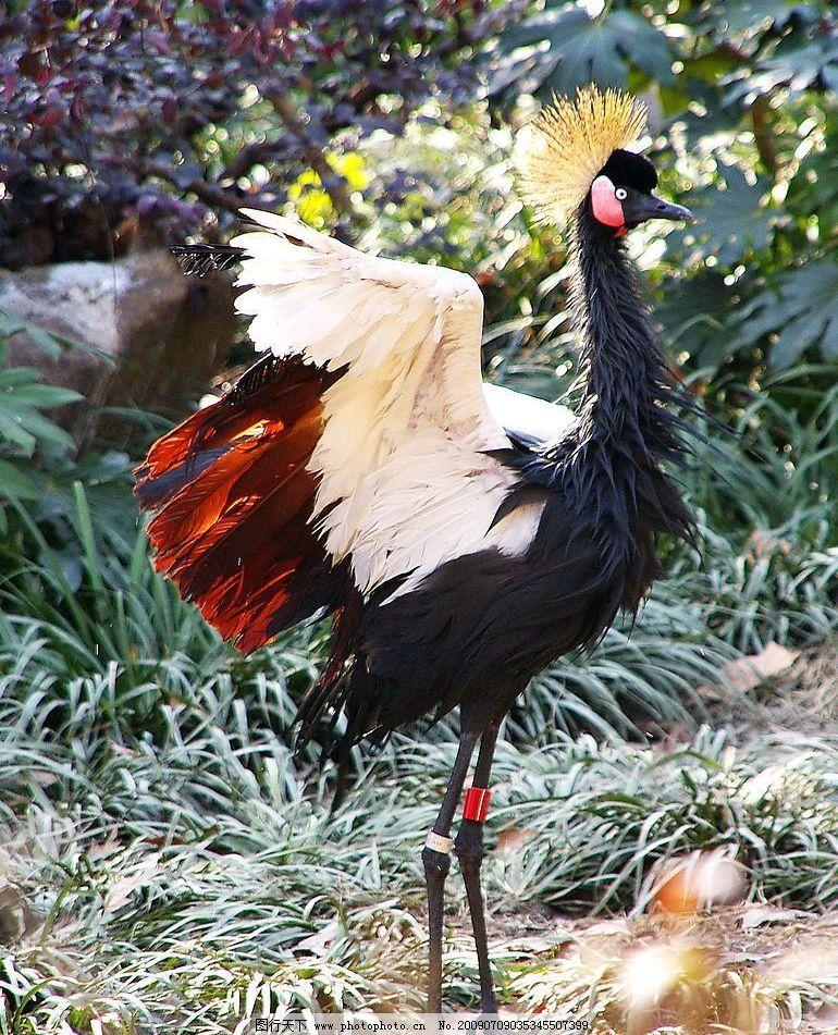 鹳鸟 珍惜动物 生物世界 鸟类 摄影图库 72dpi jpg