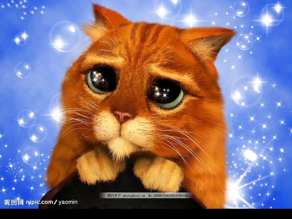 可爱猫 可爱的小动物 家畜 大眼猫 星光背景 生物世界 动物世界