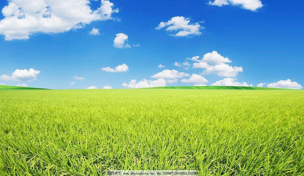 田园风光 农场 农作物 风景 田园 背景 绿地 草地 蓝天白云 蓝天 白云