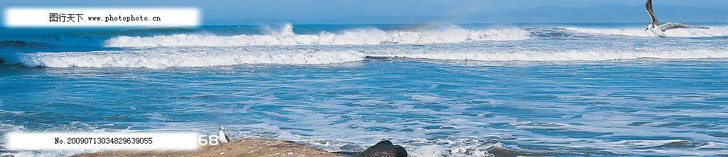 宽幅海景 海浪 海鸟 意境美好 自然景观 自然风景 摄影图库