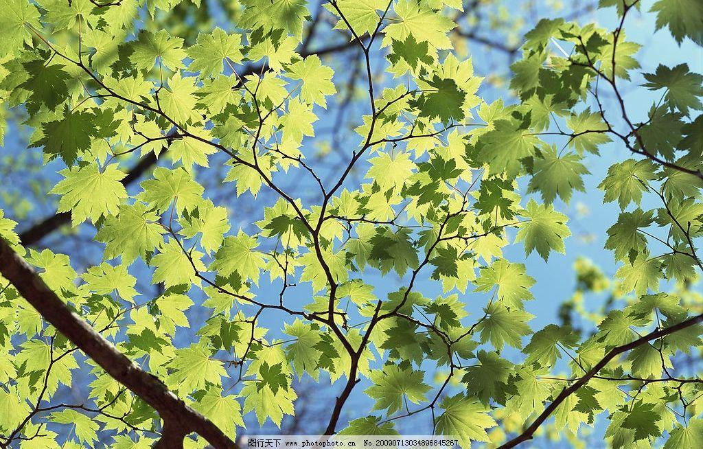 四季花木图片