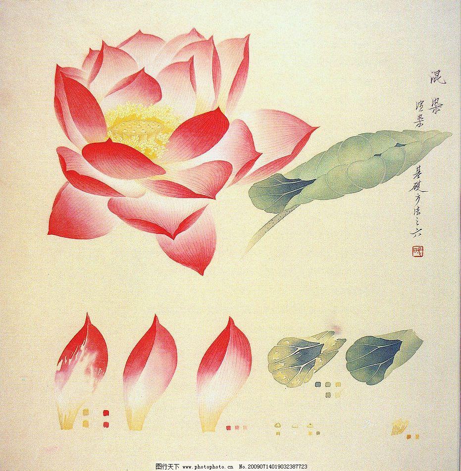 工笔花卉 国画 工笔 素材 写实 荷花 花鸟 文化艺术 绘画书法 设计