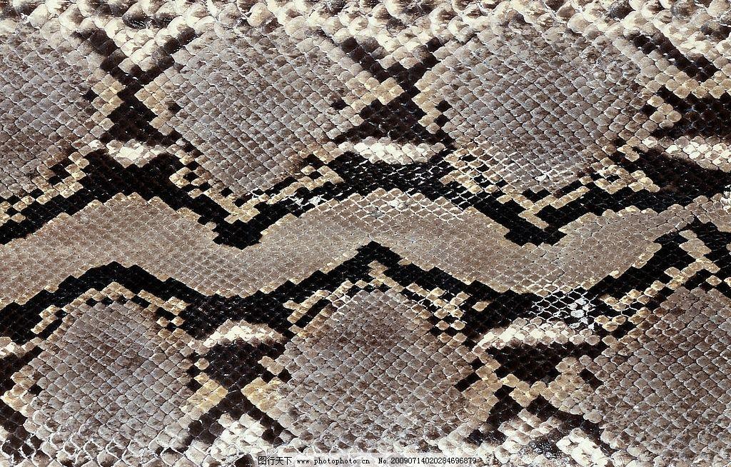 剥了皮的蛇图片