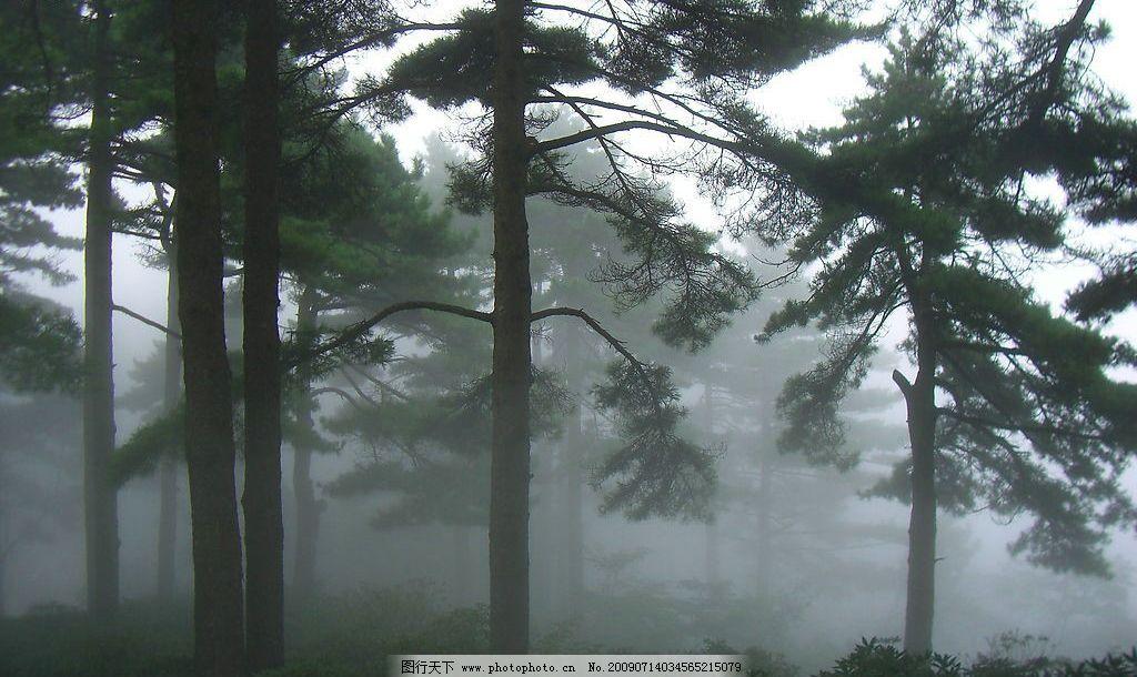 松树 森林 园林 绿色 自然景观 田园风光 摄影图库 72dpi jpg