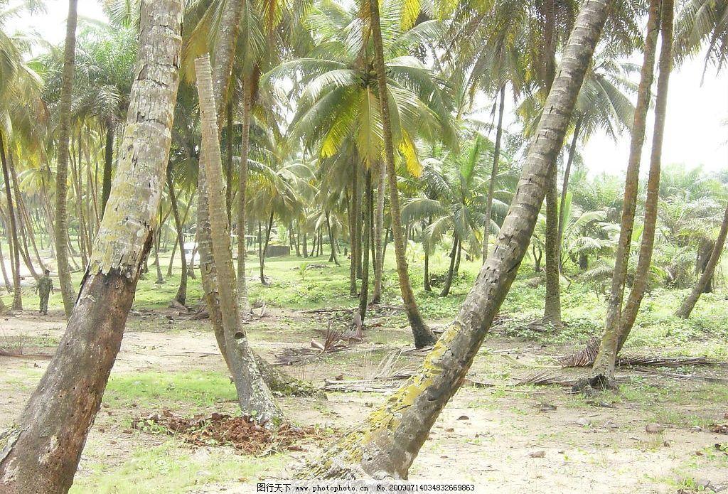 热带雨林 树木 树林 自然景观 自然风景 摄影图库 72dpi jpg