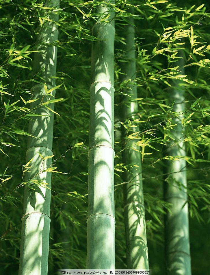 四季花木 富尔特 素材辞典 竹林 竹子 绿色 自然景观 自然风景