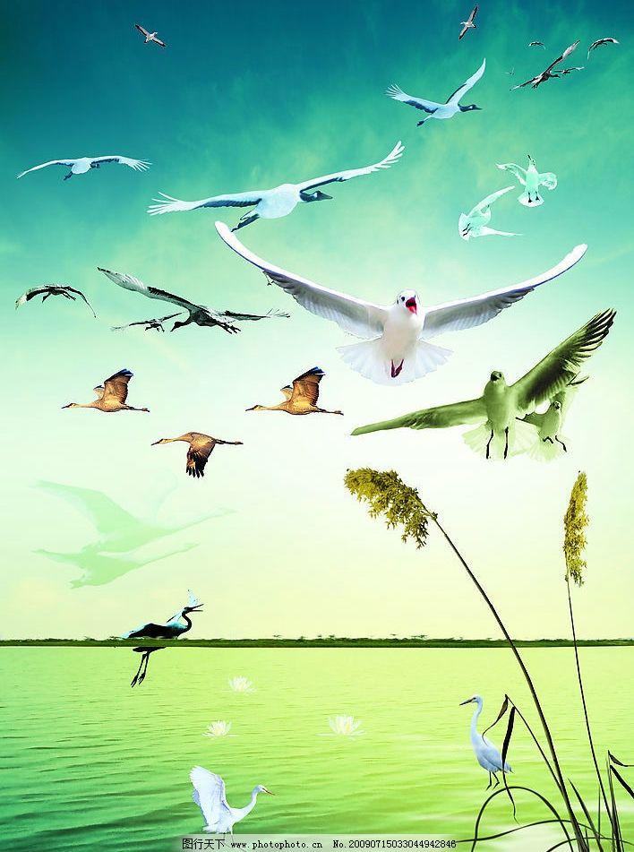 白鹤 水 海边 芦苇 和平素材 天空 风景素材等 psd分层素材 源文件库