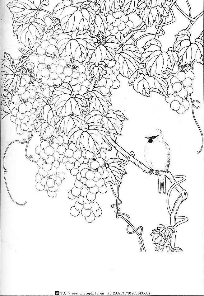工笔白描 葡萄 小鸟 文化艺术 绘画书法 设计图库 96dpi jpg