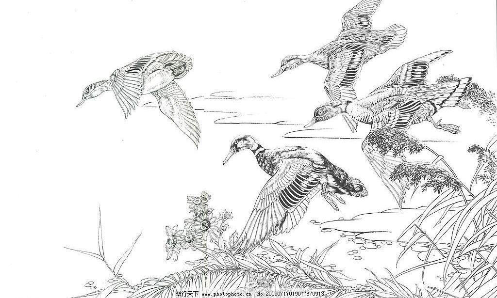 工笔白描 野鸭 芦苇 文化艺术 绘画书法 设计图库 300dpi jpg
