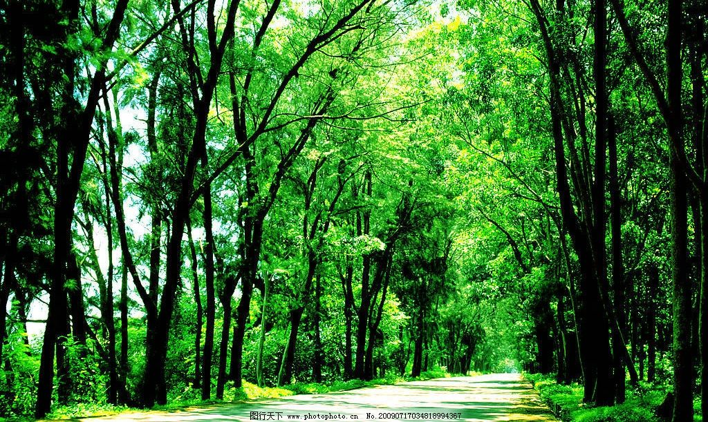 树木 绿色 绿叶 树林 林间小道 自然景观 自然风景 摄影图库 120dpi