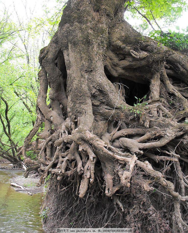 树根 灌木 森林 树木 树 植物 树木图 小河 生物世界 树木树叶 摄影