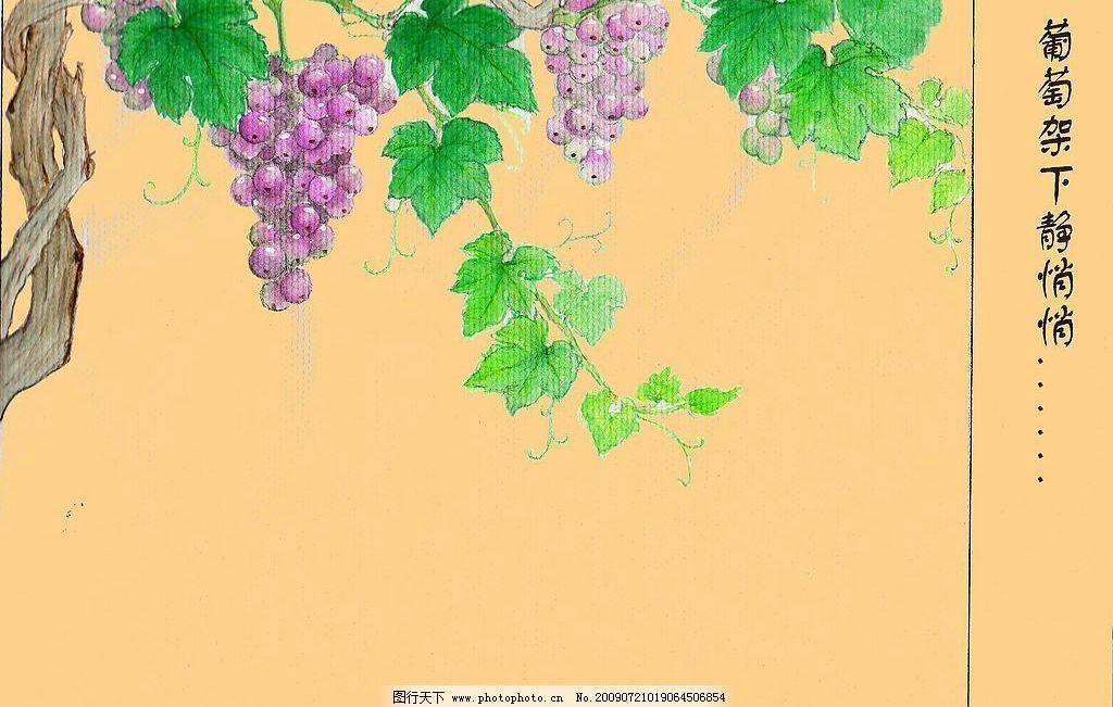 葡萄 藤蔓 绿叶 葡萄架