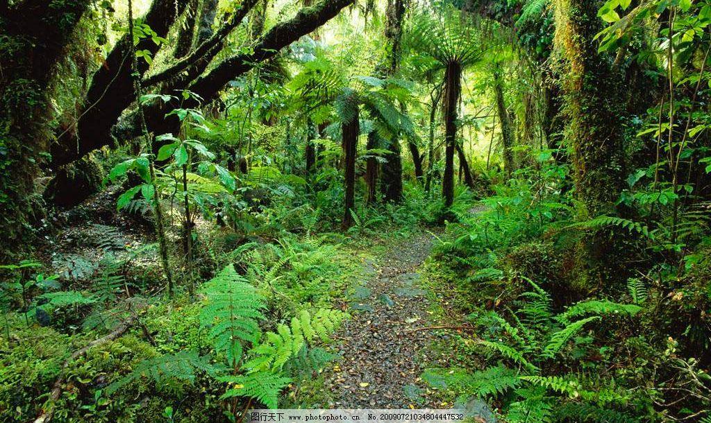森林 绿色 树木 自然景观 自然风景 摄影图库