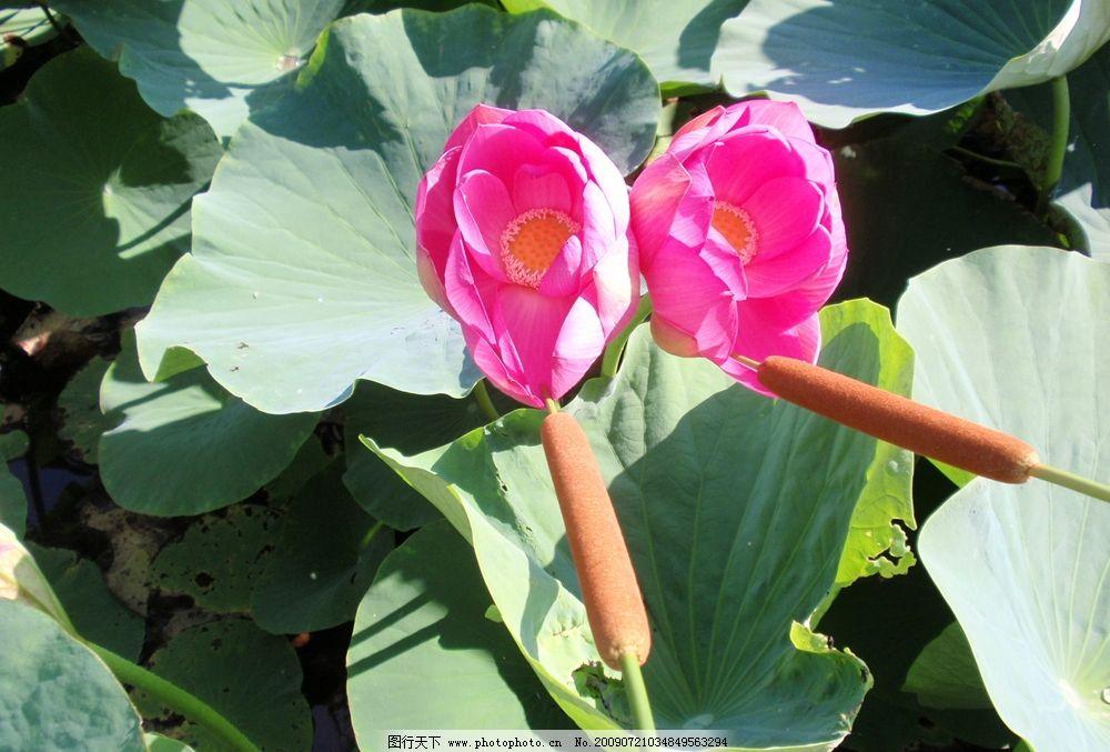 泡棉纸手工制作花朵