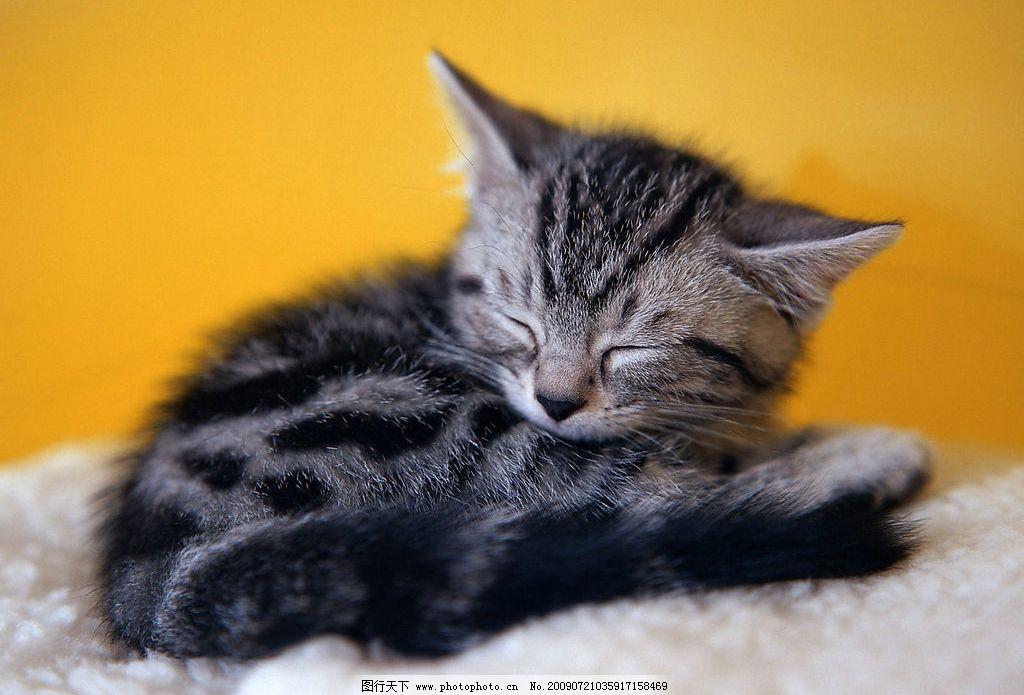 猫的爪爪 猫咪 花纹猫咪 可爱小猫 活波 家居宠物 玩耍 睡觉