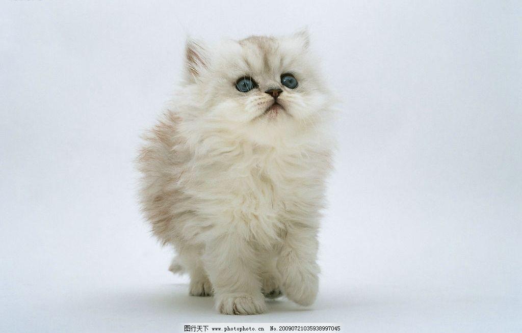 可爱小猫 可爱 小猫 生物世界 家禽家畜 摄影图库 350dpi jpg