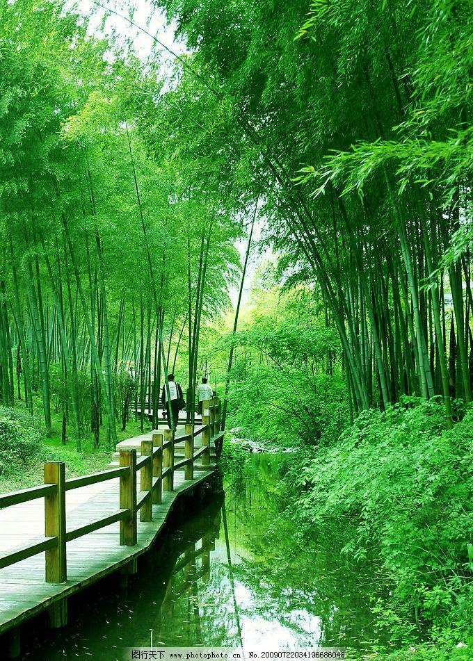 竹海 自然 绿树 青山 绿竹 木桥 游客 旅游摄影 自然风景 摄影图库