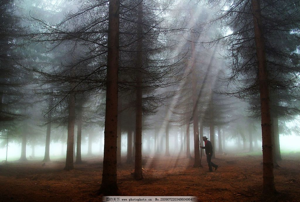 迷雾森林 森林 雾 自然景观 自然风景 摄影图库 jpg