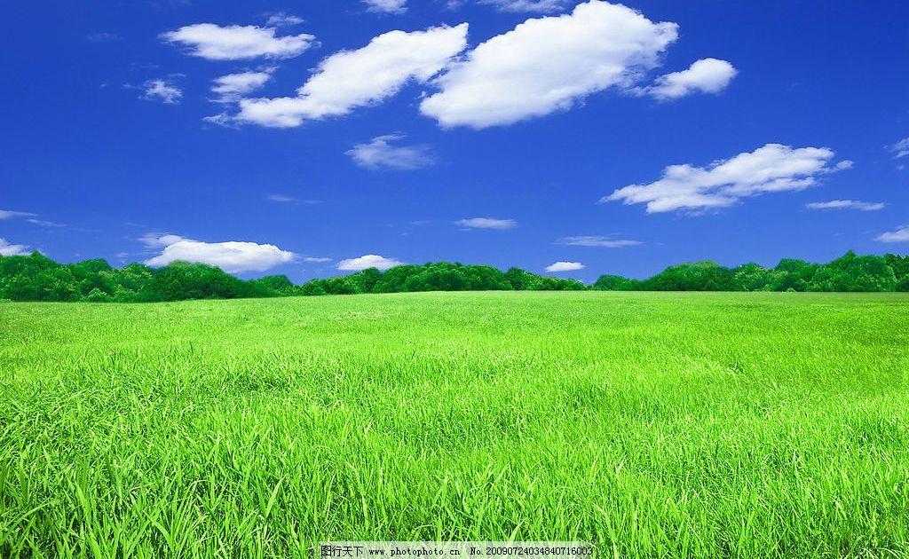 草地天空 蓝天草地 蓝天白云 绿树 草地 自然景观 自然风景 草地风景