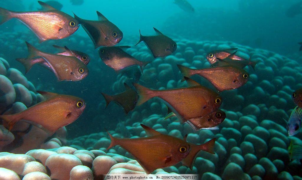 水中鱼色 大自然 景观 景象 生物 动物 水中 海底 水中生物 鱼类 生物