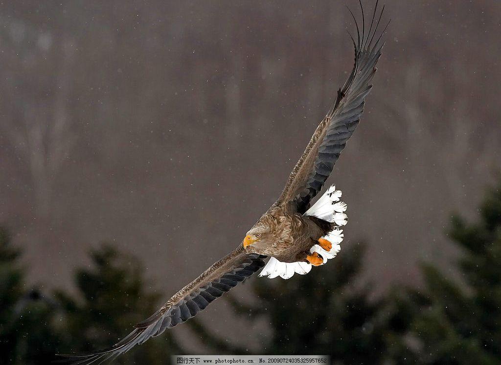 老鹰是不是保护动物