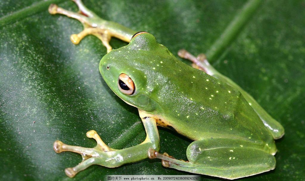 两栖类生物 青蛙 大自然 景观 景象 生物 动物 水中 陆上 两栖动物