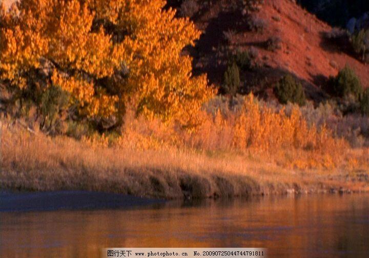 江边红叶 高清晰 江水 岸边 枫树 秋天 红叶 飘落 动态素材 视频剪辑