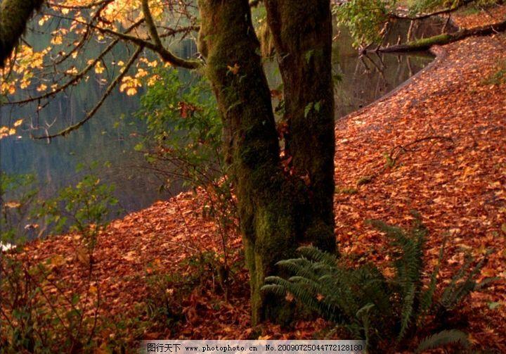 河边红叶 高清晰 河水 岸边 枫树 秋天 飘落 动态素材 视频剪辑