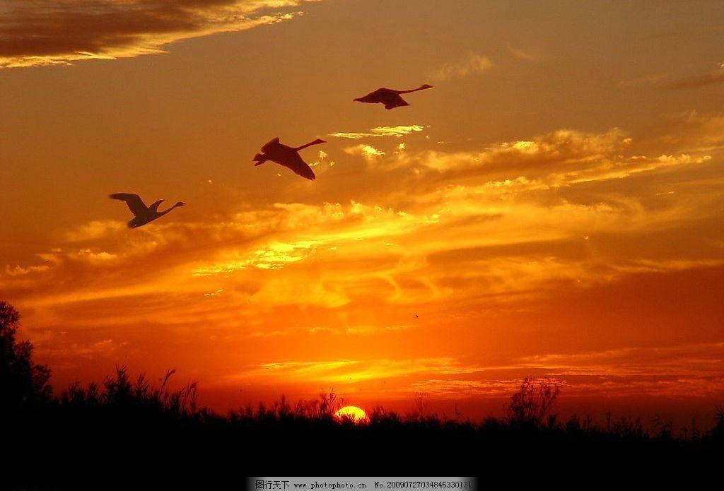 七里海 日落 夕阳 彩霞 大雁 芦台 自然景观 自然风景 摄影图库 72dpi