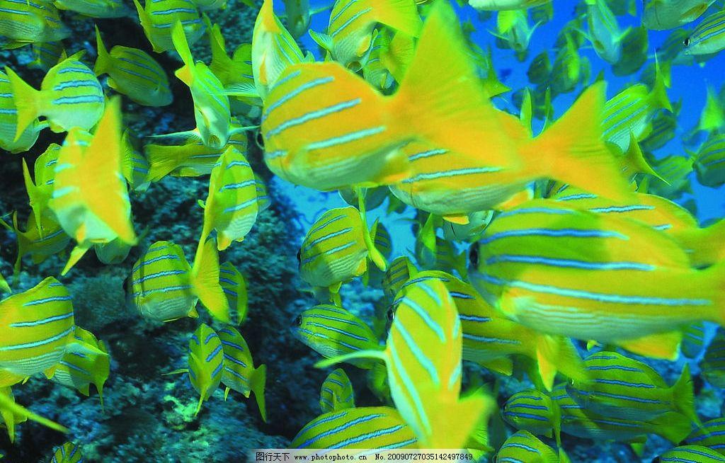 鱼群 海底世界 生物世界 海洋生物 海洋世界 摄影图库 72dpi jpg