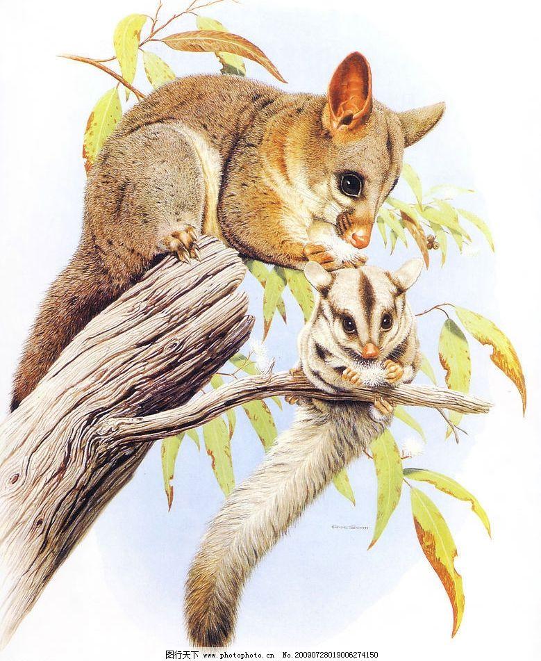 写实手绘动物1图片