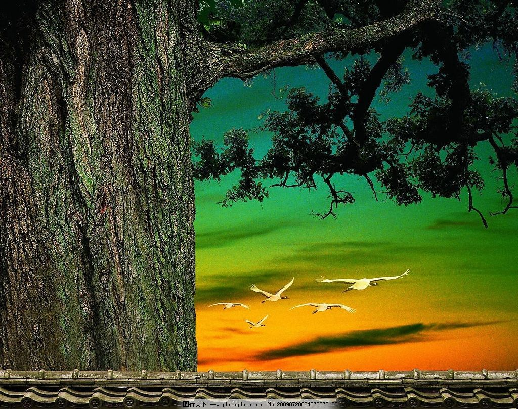 老榕树图片
