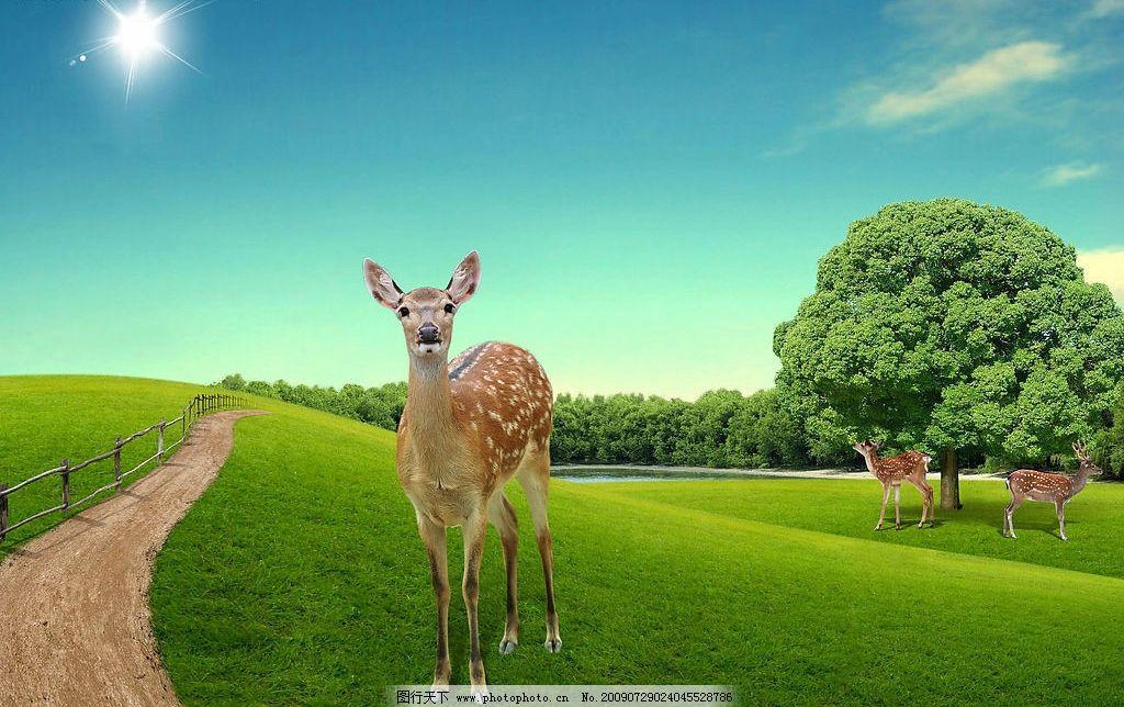 梅花鹿 草地 路 蓝天 白云 太阳 森林 树木 野生动物自然园