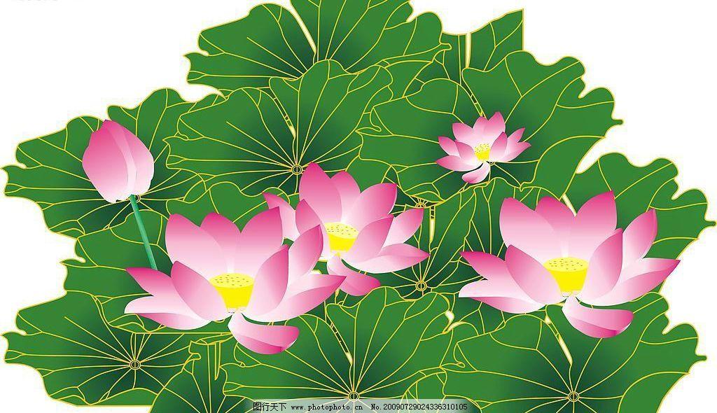 荷花 绿叶 粉色 绿色 白色 叶子 矢量图 矢量图库